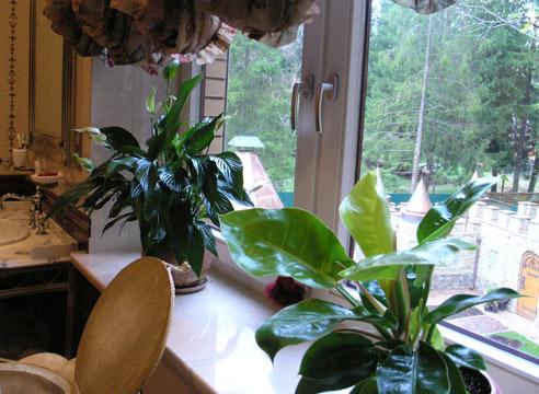 Простые и важные советы по уходу за аглаонемой в домашних условиях